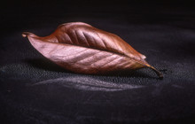 Close-up Of Dry Brown Leaf On Table