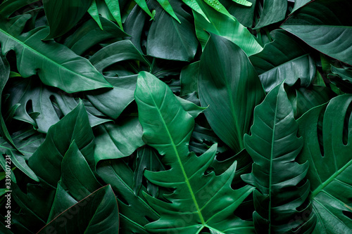 Fototapety, obrazy: closeup nature view of green leaf and palms background. Flat lay, dark nature concept, tropical leaf