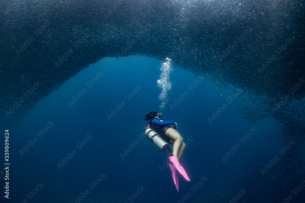 Fototapeta A female scuba diver diving with millions of fish in the Philippines.