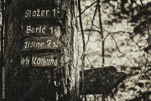 Obraz na plátně Close-up Of Directional Signs On Tree Trunk