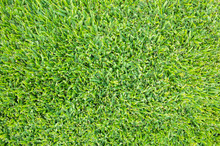 View Of Buffalo Grass/lawn From Above. Background Texture Of Freshly Cut And Healthy Green Grass.