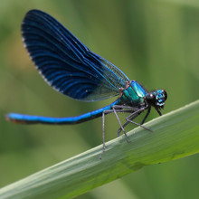 Dragonfly, Insect, Damselfly, Nature, Macro, Blue, Green, Animal, Wildlife, Bug, Wings, Wing, Grass, Fly, Closeup, Summer, Leaf, Insects, Fauna, Wild, Beautiful, Close-up, Odonata, Eye, Dragon