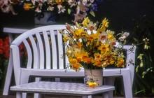 Daffodils In Vase At Table In Backyard