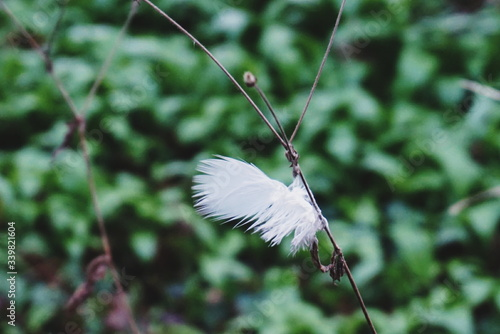 Scenic View Of Bird Feather Caught On Twig