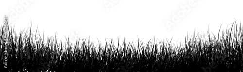 grass meadow vector illustration Canvas