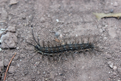 Foto High Angle View Of Centipede On Field