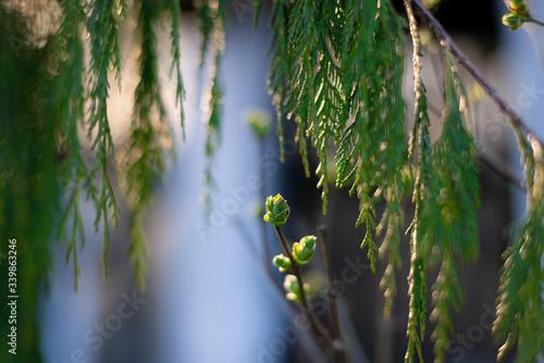Obraz wiosna, bez, światło - fototapety do salonu
