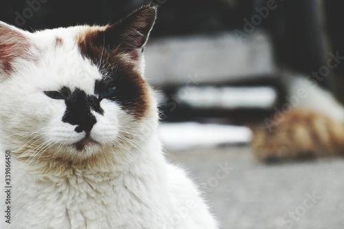 Foto Close-up Of White Cat