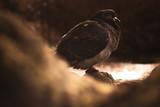 Fototapeta Zwierzęta - ptak gołąb natura zwierzęta zwierzę