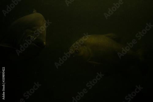 ryba mętna woda tajemniczość