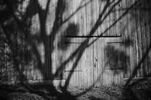Shadow Of Trees On Barn