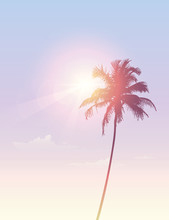 Palm Tree Silhouette On Summer...