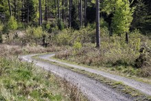 View Of Dirt Road In Forest