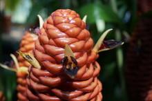 Macro Shot Of Plant At Royal Botanic Gardens