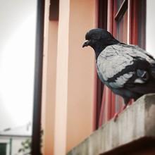 Birds Perching On Window Sill