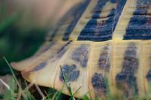 Schildkrötenpanzer Nahaufnahme