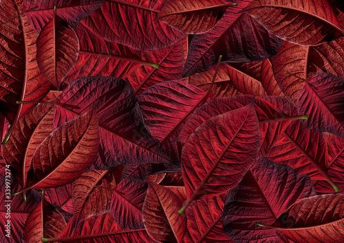 Photo Modello di stella di Natale rossa