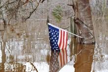 American Flag In Wetland