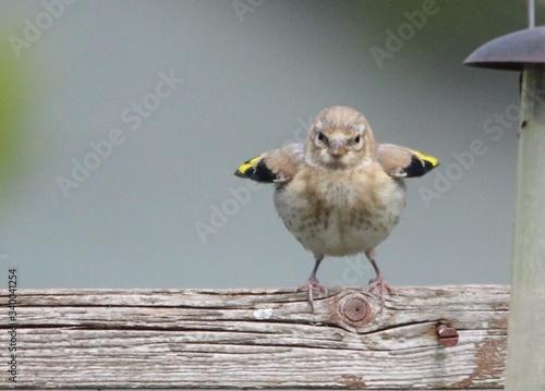 Obraz na plátne Bird Perching On Wooden Wall