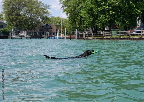 Fotografie, Obraz Dog Swimming In Water