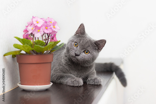 Photo Cat and home flower in a pot