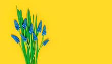 Flowers Composition. Blue Spri...