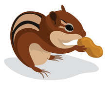Chipmunk With Peanut, Illustration, Vector On White Background