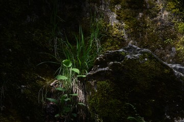 Plants Growing Amidst Moss Covered Rocks