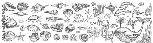 Big set of shells and sea animals