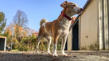 Low Angle View Of Jack Russell Terrier Standing On Street