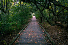 A Wooden Foot Path Stretching Through A Forest, Covered With Leaves While Tree Branches Lean Over Head