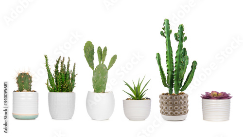 Cuadros en Lienzo Group of various indoor cacti and succulent plants in pots isolated on a white b