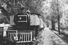 Steam Engine Train Against The Trees