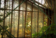 Metal Gate Against Abandoned Greenhouse