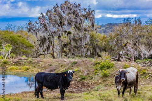 Fotografia Reserva natural Miraflor Esteli Nicaragua