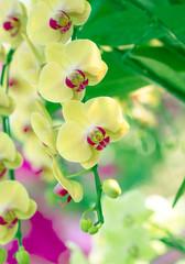Panel Szklany Podświetlane Do łazienki orchid