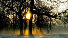 Sun Shining Through Bare Trees In Forest During Sunset