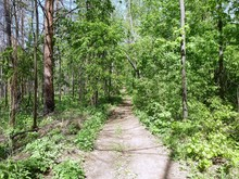 A Straight Forest Path Through...