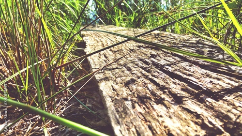 Obraz Close-up Of Wood Amidst Grassy Field During Sunny Day - fototapety do salonu