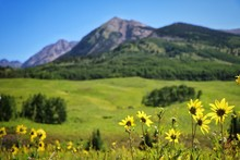 Yellow Flowers On Field Against Mountains At Crested Butte