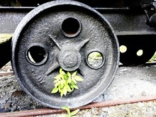 Plant Emerging From Old Wheel