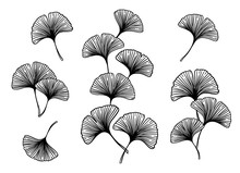 Ginkgo Biloba Leaves And Branches Set