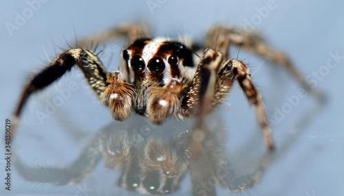 spider arthropod weaving a web Canvas Print