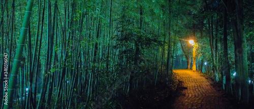 Walkway Amidst Trees At Night - fototapety na wymiar