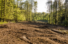 Wald Roden Und Vorbereiten Fü...