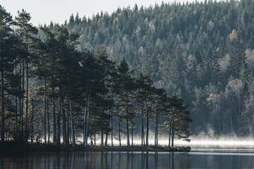Fototapeta Drzewa Headland with trees at still lake, Sweden.