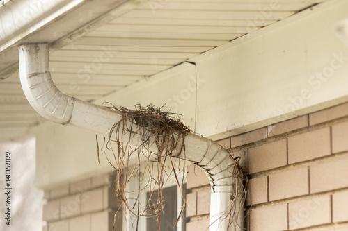 Fotografie, Obraz A partially built bird nest
