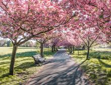 Greenwich Park In Lodnon