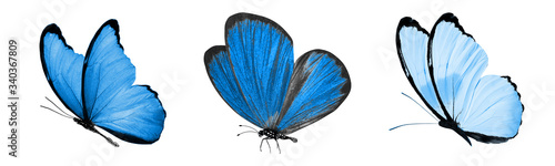 Fotografia, Obraz beautiful blue tropical butterflies isolated on a white background