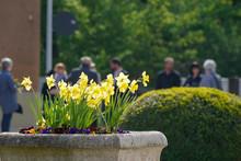 Gelbe Blumen Vor Trauergemeins...
